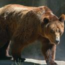 Чем питаются медведи
