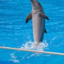 Дельфины— видео