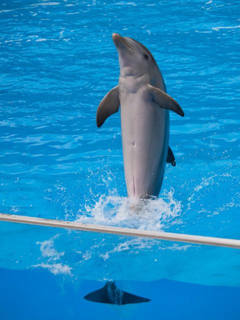 дельфины видео